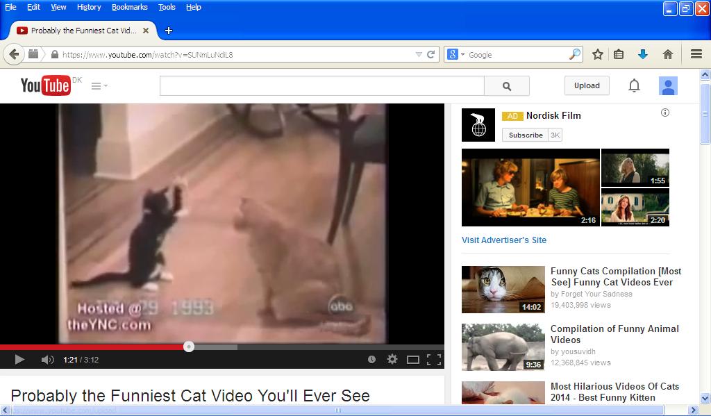 cat_video